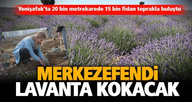 Merkezefendi Belediyesi 20 bin metrekare alanı lavanta bahçesine dönüştürdü