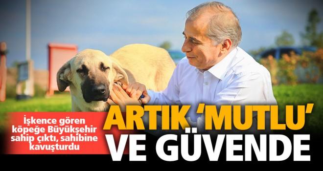 İşkence edilen köpek, sahibine teslim edildi