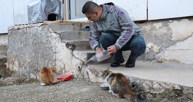 Beslediği sokak hayvanlarının zehirlendiğini iddia eden kişi polise başvurdu