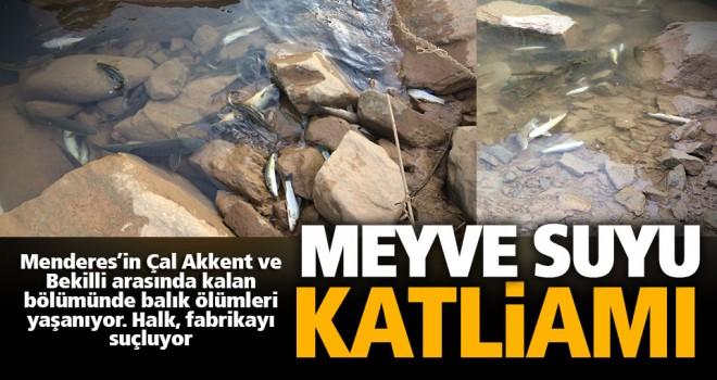 Meyve suyu atıkları Menderes'te balıkları öldürdü