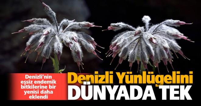Çameli'de yeni bir bitki türü keşfedildi